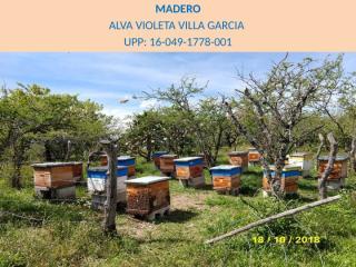 fotos de agosto 2018 abejas.pptx