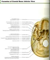 Cranial opening contents.pdf