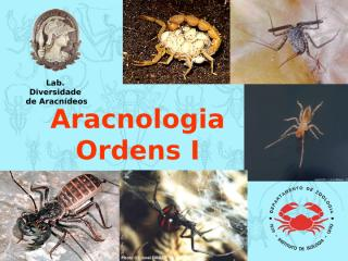 IBZ232 - Arachnida - Ordens I.ppt